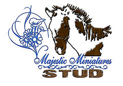 MMH Stud is situated in Sundra,  15km from Delmas in Mpumalanga. Our stud was born in August 2010, when we bought our first mini horse. We currently have 3 Herd Stallions, 7 Mares and 3 Geldings